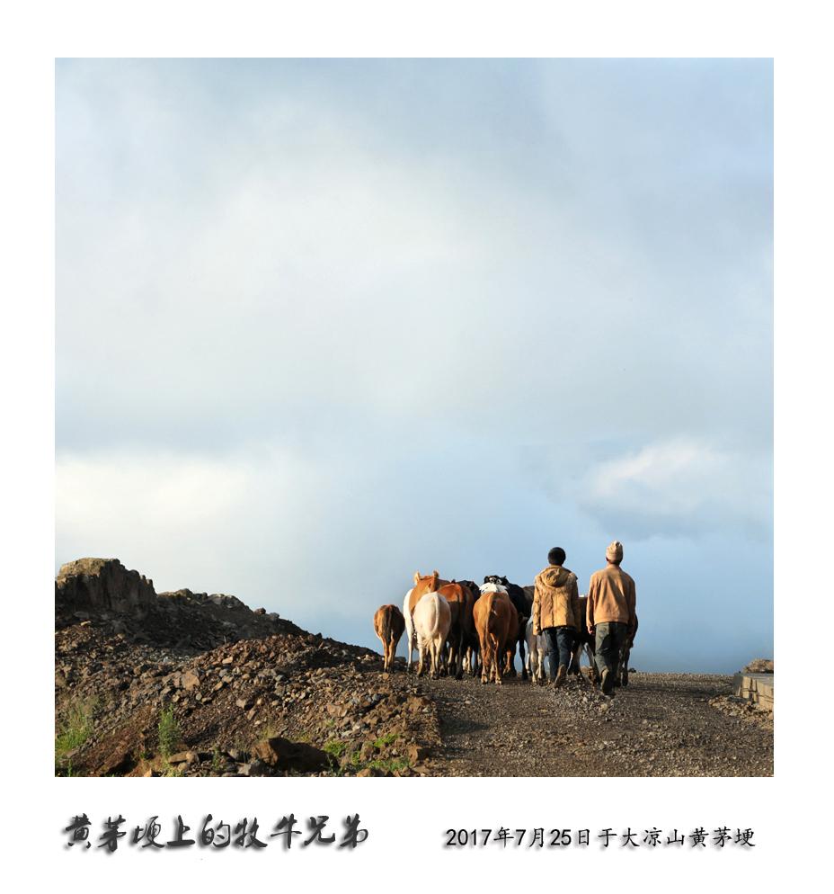 鏀剧墰鍏勫紵 (1).JPG