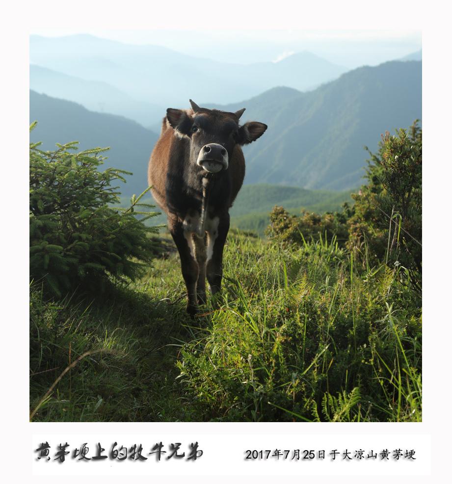 鏀剧墰鍏勫紵 (4).JPG